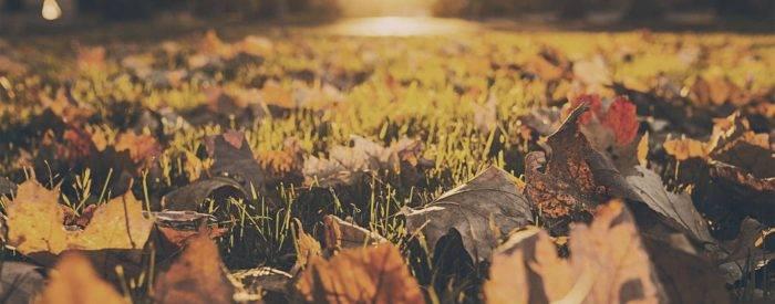 Złota jesień - zabiegi SPA w cenie