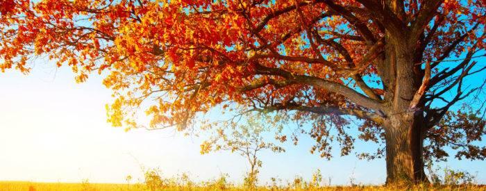 Złota Jesień - pakiet 5 nocy